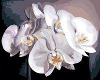 """рисование по номерам """"Белые орхидеи"""""""