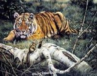 "Раскраска по номерам ""Тигр"""