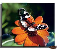 миниатюра Бабочка 1