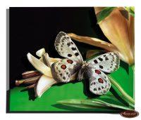 миниатюра Бабочка 2