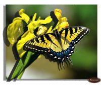 миниатюра Бабочка 3